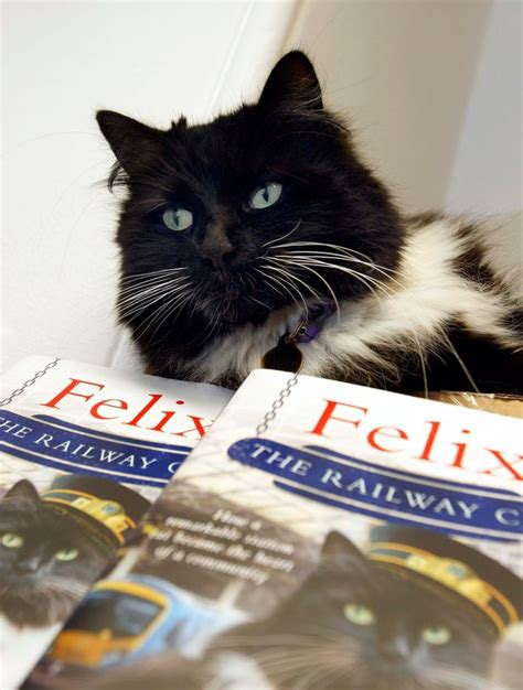 felix the railway cat books huddersfield s station cat felix releases limited edition