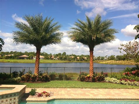 sylvester date palm landscape install gorgeous my