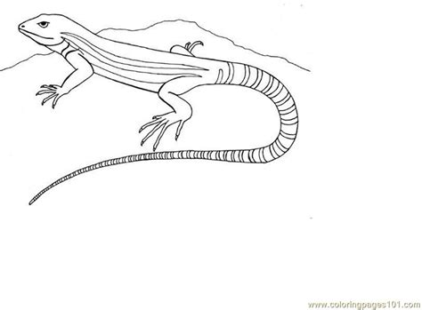 Coloring Pages Lizard Reptile Gt Lizard Free Printable Lizard Colouring Pages