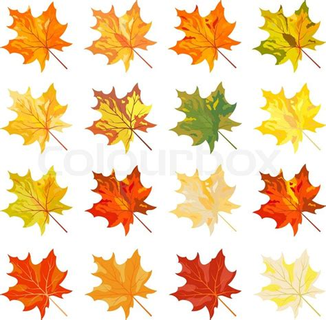 fall leaf colors collection of color autumn leaves stock vector colourbox