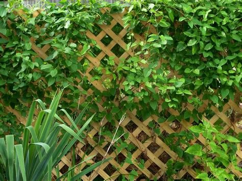 Backyard Trellis by 4 Simple Functions For A Garden Trellis Garden Trellis Make Your Garden Beautiful