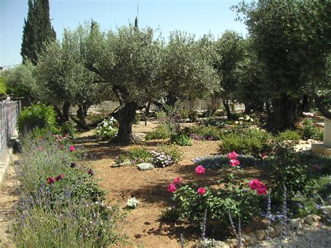 der garten gethsemane im garten gethsemane tagebuch der pilgerfahrt 2010 nach