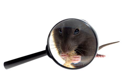 muizen in huis muizen vangen meldpunt ongedierte