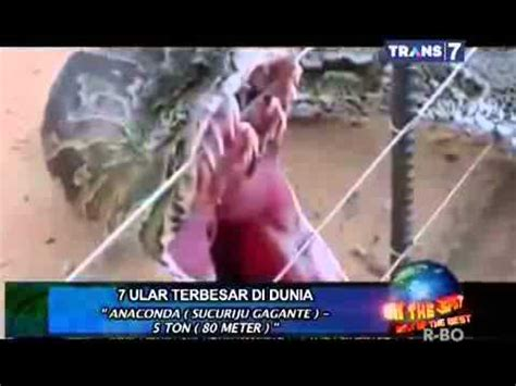 payudara terbesar didunia on the spot 7 ular terbesar di dunia yang pernah ada