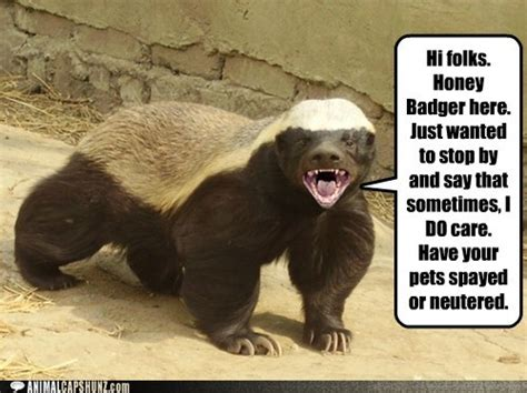 picture  badger picture  news icon