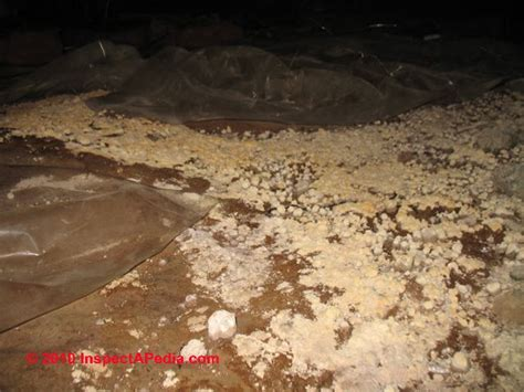what causes mold in basement the significance treatment of mold on dirt in crawl