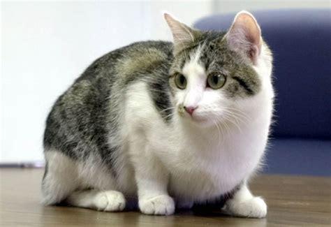 imagenes geniales de gatos so 241 ar con gatos