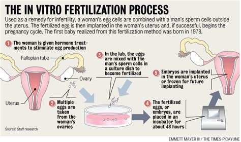 Detox After Successful Ivf Drugs by Infertility Treatment Success Rate In Ivf United Kingdom