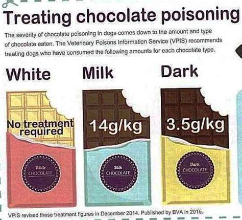 symptoms of chocolate poisoning in dogs chocolate poisoning in dogs symptoms thin