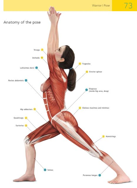 boat pose muscles used the anatomy of warrior i quarto knows blog