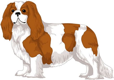 coloring pages of cavalier king charles spaniels king charles cavalier coloring pages