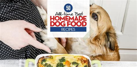 food recipe vet recommended 50 best food recipes to replace kibble