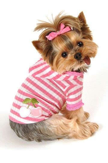 sweaters for yorkies yorkie sweaters