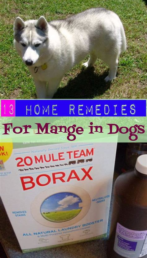 13 home remedies for mange in dogs homeremedies for