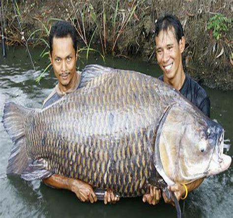 umpan tombro world fishing