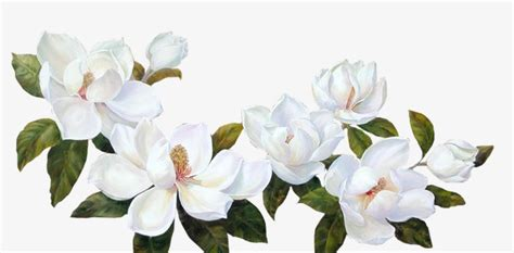 high c gardenias gardenia white flower green leaves png image and clipart
