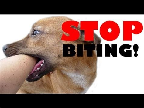 how to get your puppy to stop biting you the reviews how do i get my puppy to stop biting me how