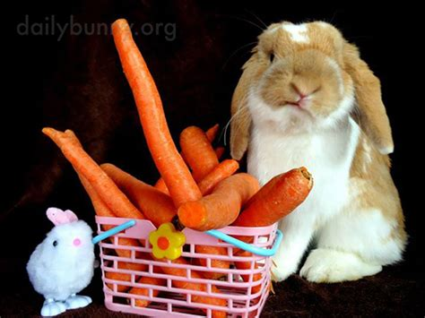 Some On The Go With The Rabbit Travel Vibe by Bunny Needs Some Greens To Go With These Carrots The