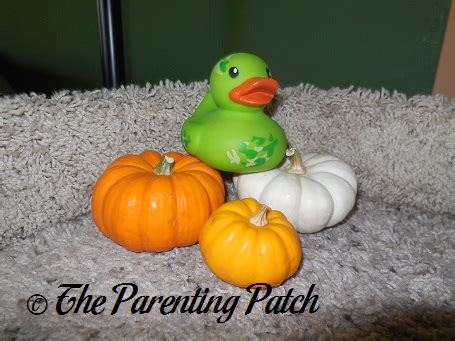 pumpkin rubber st the duck and the miniature pumpkins the rubber ducky