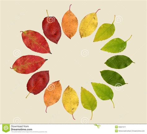 different colors of autumn leaves in different colors stock photo image