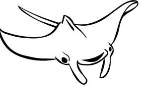 Manta ray drawing group picture image by tag keywordpictures com