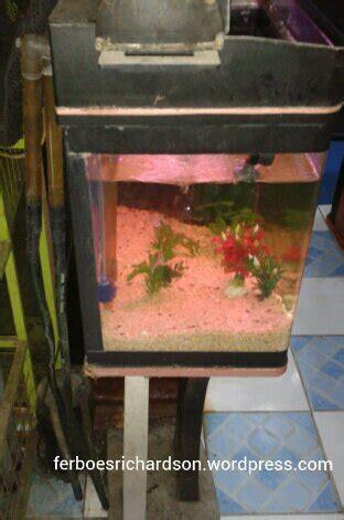 membuat filter aquarium kecil aquarium kecil terlihat rapi dengan external filter