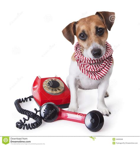 call puppy call center phone stock image image of answering 34835599