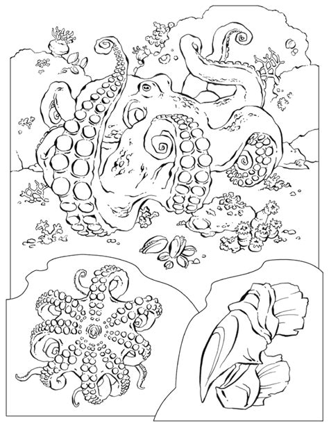 national geographic coloring pages pdf original gif coloring home