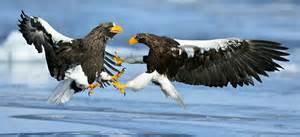Wildlife 10 amazing photos by yves adams animal stories