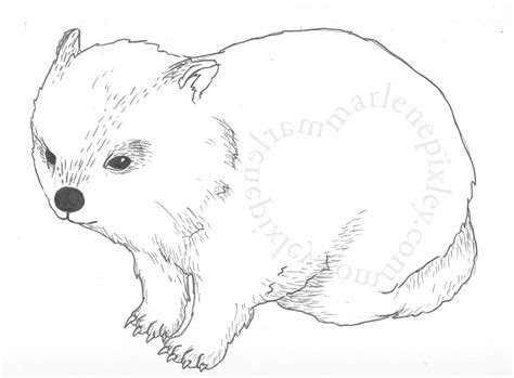 Wombat Drawing 9 10 From 68 Votes Wombat Drawing 6 10 From Wombat Coloring Page