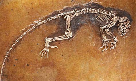 Imagenes De Fosiles | el refugio los f 243 siles