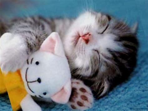 immagini di gatti persiani gatti le foto pi 249 33 40 pourfemme