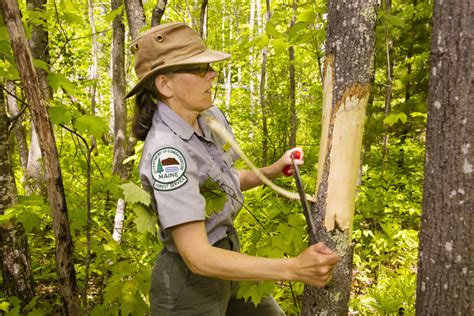service maine maine s parks are fertile places for research the portland press herald maine