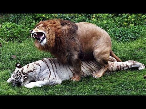 imagenes reales e invertidas 7 animales h 237 bridos totalmente reales youtube