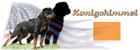 rottweiler puppies in louisiana rottweiler for sale louisiana dogs our friends photo