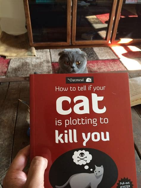 how to tell if is in how to tell if your cat is plotting to kill you myfunnypalace
