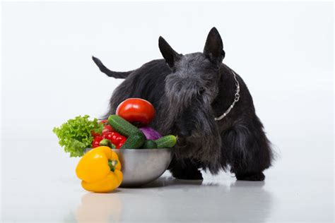 is broccoli ok for dogs can dogs eat broccoli american kennel club
