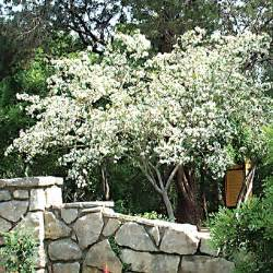 The Patio New Smyrna Beach Fl Hometalk What Types Of Plants And Trees Grow Well In