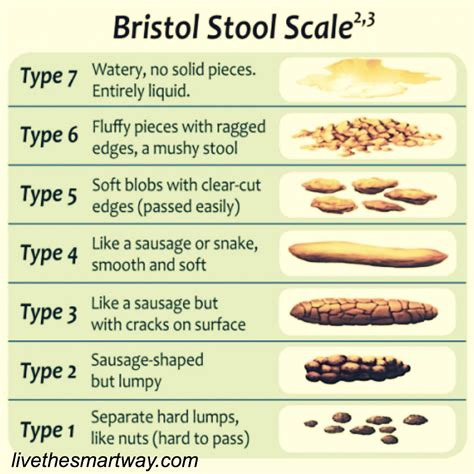 Stool Is Like Water by Digest This The Scoop On Your Brazenwoman