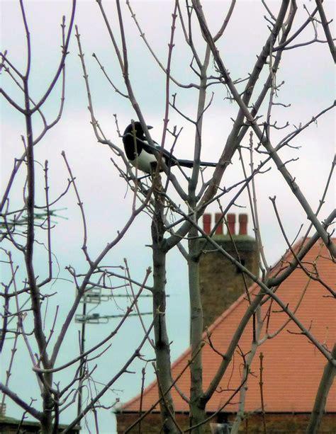 Silver Garden Spider Diet Magpies Highbury Wildlife Gardenhighbury Wildlife Garden