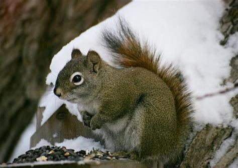 squirrels diet habits other facts