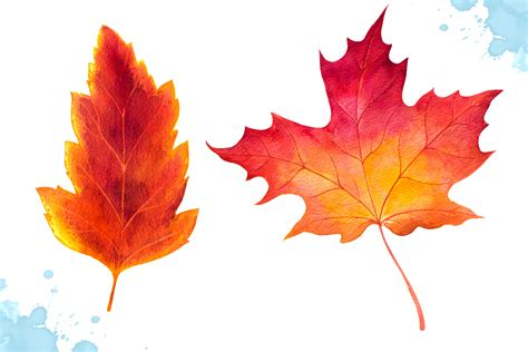 Leave Set by Autumn Leaves Watercolor Set By Alexg Design Bundles