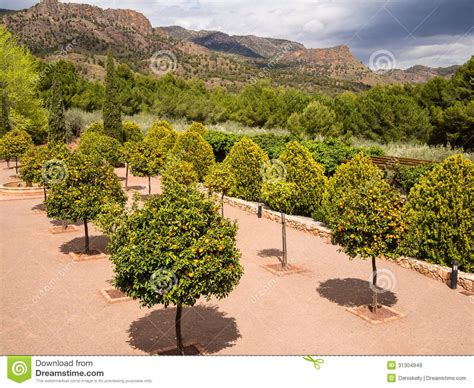 Orchard Garden by Orange Tree Orchard Garden In Spain Royalty Free Stock