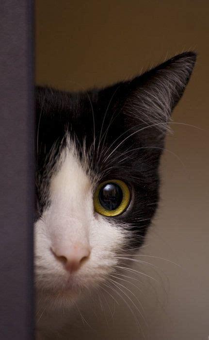 setelan peek a boo cat always a peek a boo cat my boys and