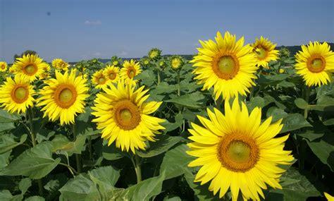 mooie bloemen afbeeldingen afbeeldingen bloemen