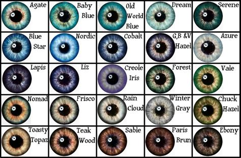 different types of eye colors eye color chart eye color and color charts on