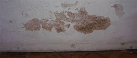 Feuchtigkeit In Der Wand Entfernen by Schimmel An Der Wand Entfernen Schimmelpilz Beseitigen