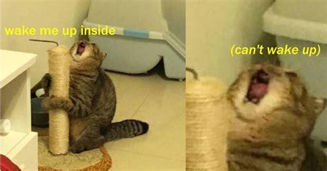 Sassy Cat Meme - you feline funny 15 cat memes that are a gift to the internet