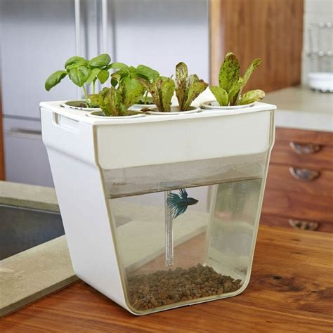backyard aquaponics kit learn to aquaponic this is home aquaponics kit