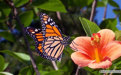 download fantastic butterfly screensaver animated free 3d butterfly wallpaper wallpapersafari